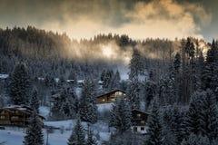 Pälsfodra-trees trä, plötslig nedstigning Treesfält och snow Royaltyfria Bilder