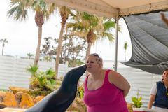 Pälsskyddsremsan kysser kvinnor Visa i teatern havet Arkivbilder
