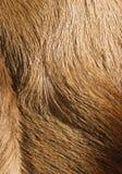 pälstexturer royaltyfri bild