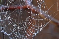 Pärlanätverk Arkivbild