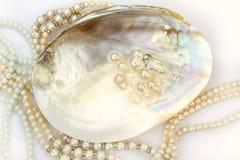 Pärlemorfärg halsband med naturliga pärlor i ett ostronskal Arkivfoton