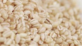 Pärlemorfärg korn med plågor stock video