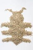 Pärlemorfärg korn (prytt med pärlor korn) Royaltyfria Foton