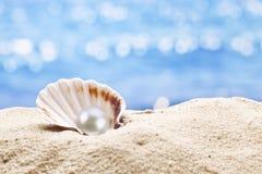 Pärlemorfärg ostron i sanden royaltyfri fotografi