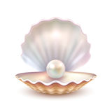 Pärlemorfärg Shell Realistic Close Up Image royaltyfri illustrationer