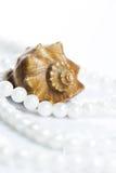 pärlemorfärg snäckskal för halsband Arkivfoto