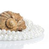 pärlemorfärg snäckskal för halsband Arkivbild