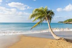 Pärlemorfärg strand royaltyfria foton