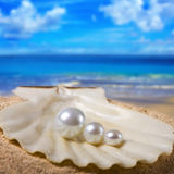 pärlor shell tre arkivfoton
