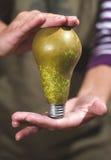 Päron för Eco energilampa Royaltyfria Foton