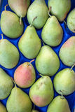 Päron i asken Fotografering för Bildbyråer