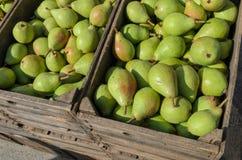 Päron i en fruktspjällåda Royaltyfria Bilder