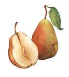 Päron och päron för sammansättning som hela nytt skivas i halva och att visa trämassan och fröt inom Arkivbild