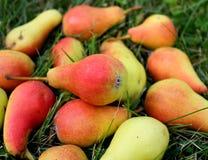 Päron som ligger på gräset Royaltyfri Bild