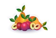 Päronplommonfrukt på vit bakgrund, sund livsstil eller bantar begreppet, logoen för nya frukter royaltyfri illustrationer