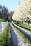 Päronträd längs körbanan royaltyfri bild