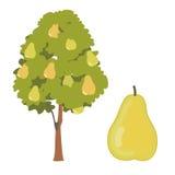 Päronträd och fruktvektorillustration Royaltyfria Bilder