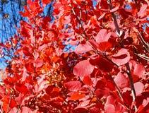 På avsked målade en härlig buske en lövverk i en ljus färg royaltyfria bilder