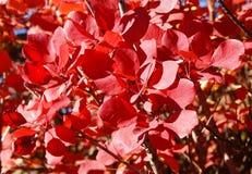 På avsked målade en härlig buske en lövverk i en ljus färg arkivfoton