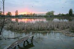 På bankerna av floden på våren Royaltyfria Bilder