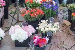 På blommamarknad Royaltyfria Foton