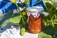 På burk hemma, krus med inlagda grönsaker Fotografering för Bildbyråer