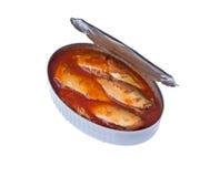 På burk sardiner i tomatsås royaltyfri foto