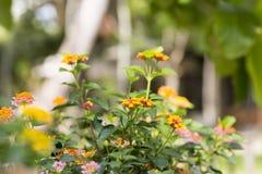 På dagar för ljust solsken finns det den härliga apelsinen och röda blommor Royaltyfria Foton
