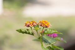 På dagar för ljust solsken finns det den härliga apelsinen och röda blommor Arkivfoton