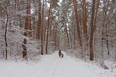 På de svarta filialerna av trädlögnerna per det tjocka lagret av snölo Royaltyfri Bild