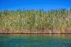 På den Dalyan floden royaltyfria bilder