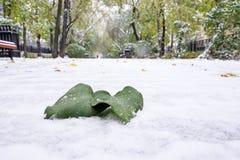På det gröna bladet för första snö i storstaden den första snön på trottoaren Arkivbild