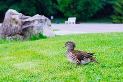 And på det ljust - grön gräsmatta För naturlig tidskrift Fotografering för Bildbyråer