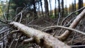 På det stupade torra trädet för förgrund med många filialer royaltyfri fotografi