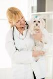 På det veterinär- arkivbilder