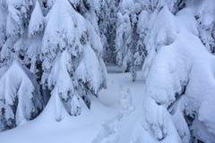 På en frostig härlig dag bland berg är magiska träd som täckas med vit fluffig snö mot idyllicllandskapet fotografering för bildbyråer