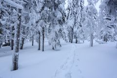 På en frostig härlig dag bland berg är magiska träd som täckas med vit fluffig snö mot idyllicllandskapet royaltyfri bild