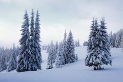 På en frostig härlig dag bland höga berg är magiska träd som täckas med vit fluffig snö Royaltyfri Fotografi