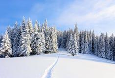 På en frostig härlig dag bland höga berg är magiska träd som täckas med vit fluffig snö mot det magiska landskapet Royaltyfri Fotografi