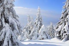 På en frostig härlig dag bland höga berg är magiska träd som täckas med vit fluffig snö mot det magiska landskapet arkivbild