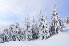 På en frostig härlig dag bland höga berg är magiska träd som täckas med vit fluffig snö mot vinterlandskapet arkivfoton