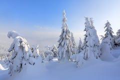 På en frostig härlig dag bland höga berg är magiska träd som täckas med vit fluffig snö mot vinterlandskapet royaltyfri fotografi