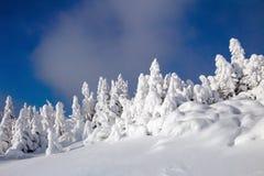 På en frostig härlig dag bland höga berg är magiska träd som täckas med vit snö Royaltyfria Foton