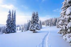 På en frostig härlig dag bland höga berg är magiska träd som täckas med vit snö mot det magiska vinterlandskapet Arkivfoton