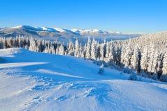 På en frostig härlig dag bland höga berg och maxima är magiska träd som täckas med vit fluffig snö Royaltyfri Bild