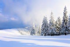 På en frostig härlig dag bland höga berg och maxima är magiska träd som täckas med vit fluffig snö Fotografering för Bildbyråer