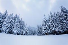 På en frostig härlig dag bland höga berg och maxima är magiska träd som täckas med vit fluffig snö för ligganderussia för 33c jan arkivbilder