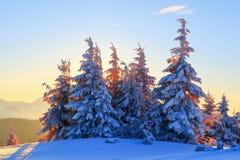 På en frostig härlig dag bland höga berg och maxima är magiska träd som täckas med vit snö som den magiska vintern landskap royaltyfri bild