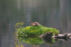 And på en gräsö Royaltyfri Fotografi