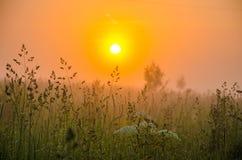 På en grön gräsmatta i den tidiga dimmiga morgonen royaltyfria foton